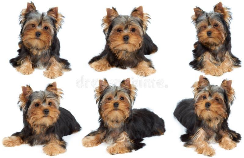 Uma sessão de foto do cão fotos de stock