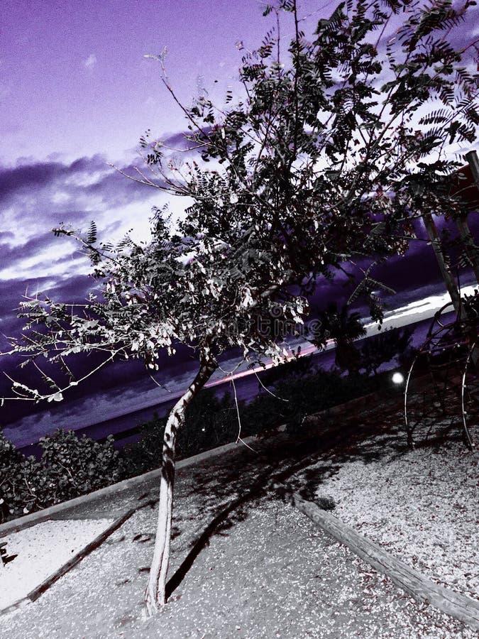 Uma sombra do inverno fotografia de stock