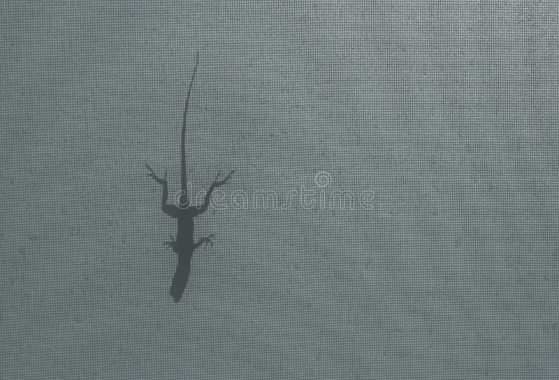 Uma sombra do lagarto do anole de Brown fotografia de stock royalty free