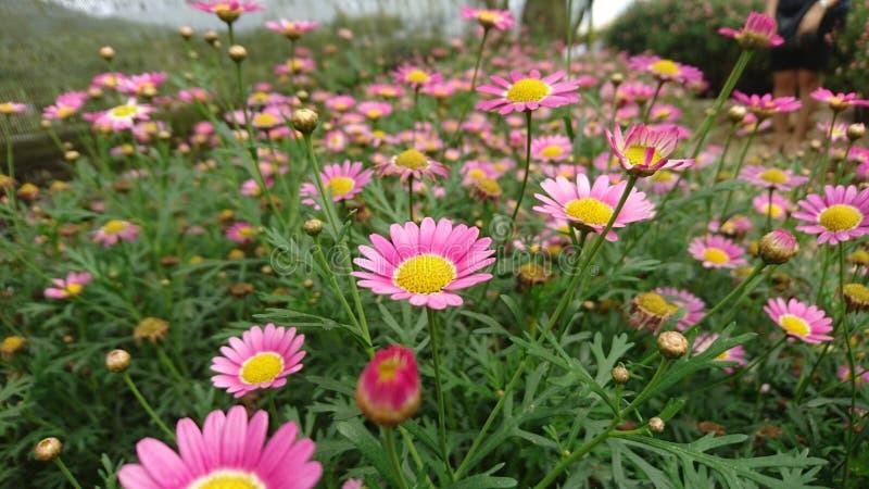Uma terra completa de flores do wold foto de stock