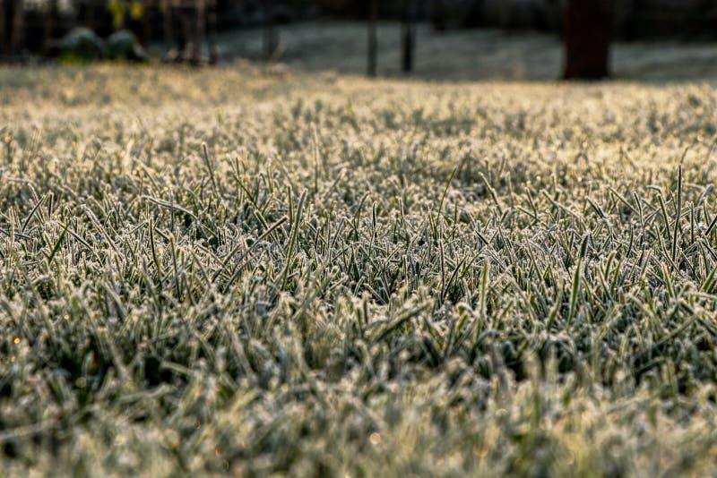 Uma terra verde congelada bonita com um toque da luz amarela está causando a calma e a harmonia em seu coração Uma grama verde no fotos de stock royalty free