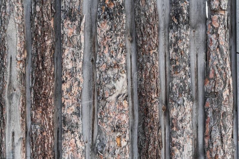 Uma textura horizontal bonita da cerca marrom e cinzenta velha das placas de madeira do pinho connosco e resina e da casca na fot fotografia de stock