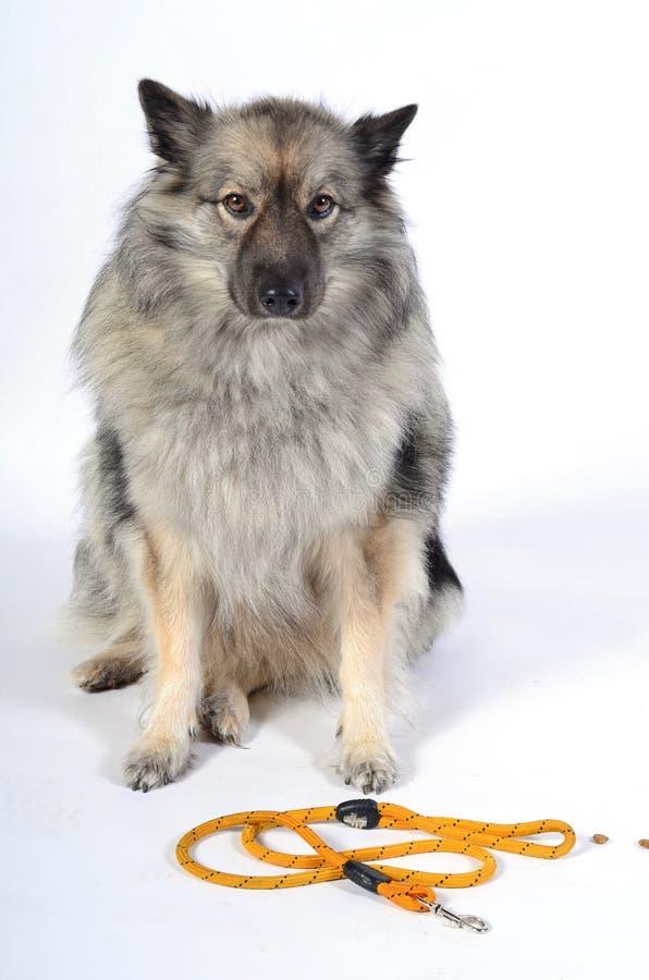 Uma trela do cão imagem de stock