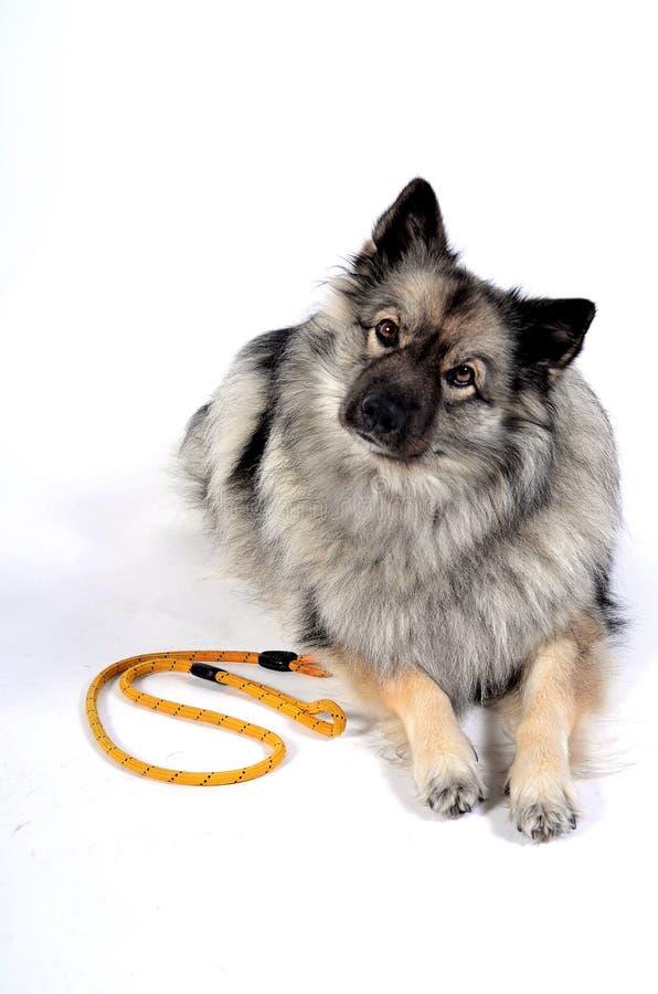 Uma trela do cão fotografia de stock royalty free