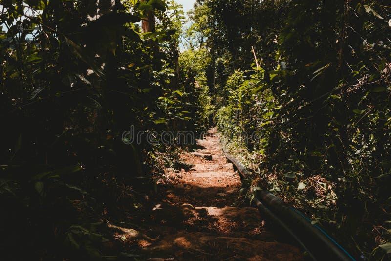 Uma tubulação molhando em uma plantação foto de stock