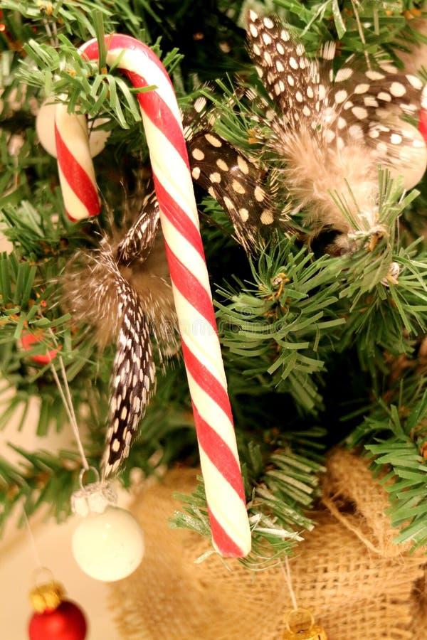 Uma vara vermelha e branca listrada do bastão de doces que pendura em uma árvore de Chistmas foto de stock royalty free