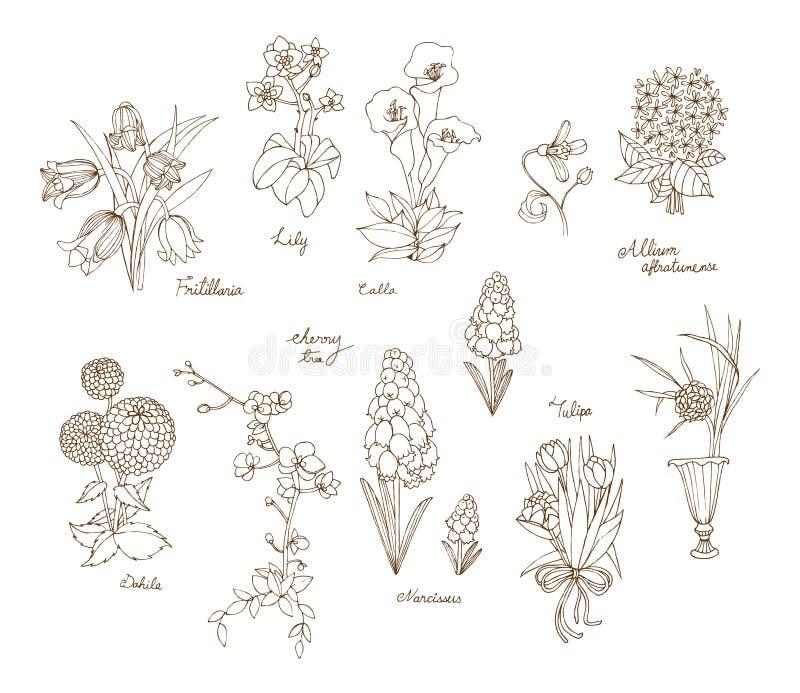 Uma variedade de flores para o estilo tirado da mola e do verão à disposição ilustração do vetor