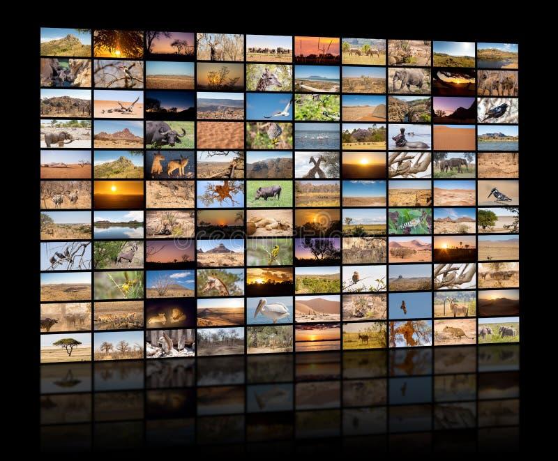Uma variedade de imagens de paisagens africanas e de animais como uma parede grande da imagem foto de stock