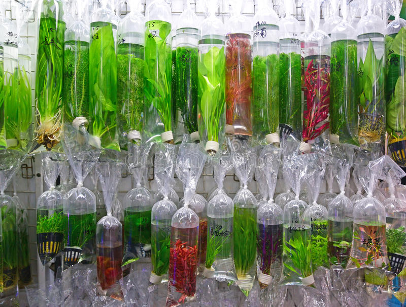 Uma variedade de plantas aquáticas decorativas comerciais fotos de stock royalty free