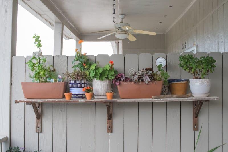 Uma variedade de plantas belamente arranjadas imagens de stock