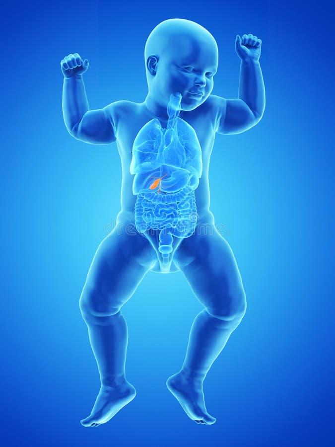 uma vesícula biliar dos bebês ilustração do vetor