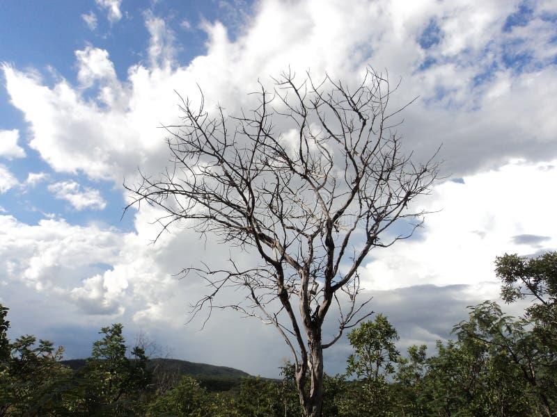 Uma vez havia uma árvore imagens de stock royalty free