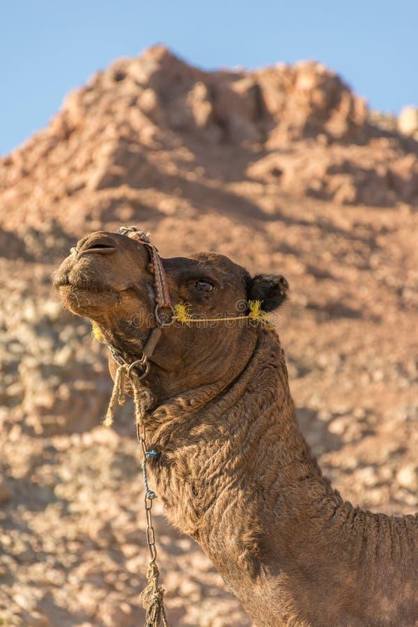 Uma viagem ao deserto de sinai fotografia de stock