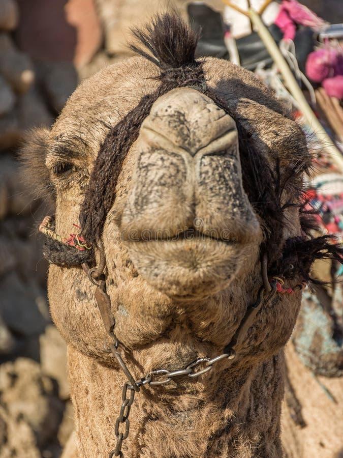 Uma viagem ao deserto de sinai imagens de stock