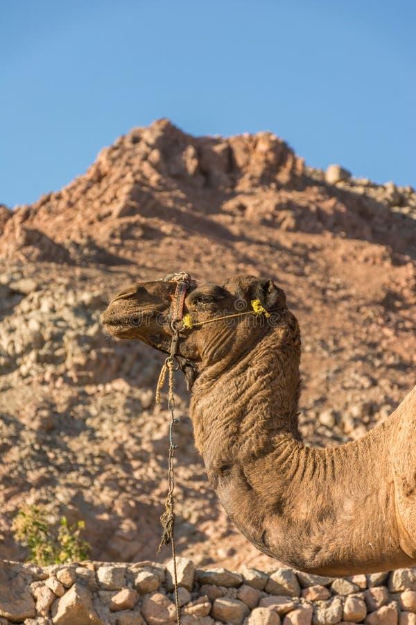 Uma viagem ao deserto de sinai foto de stock royalty free