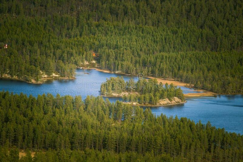 Uma vista aérea bonita de uma floresta do outono com o lago em Noruega Pinheiros de cima de imagens de stock