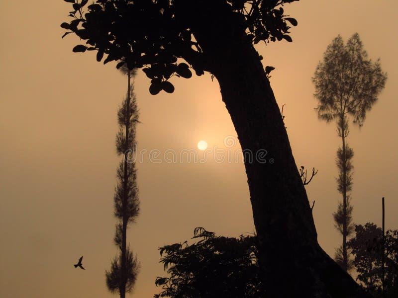 Uma vista da árvore na manhã com o sol coberto em nevoento foto de stock