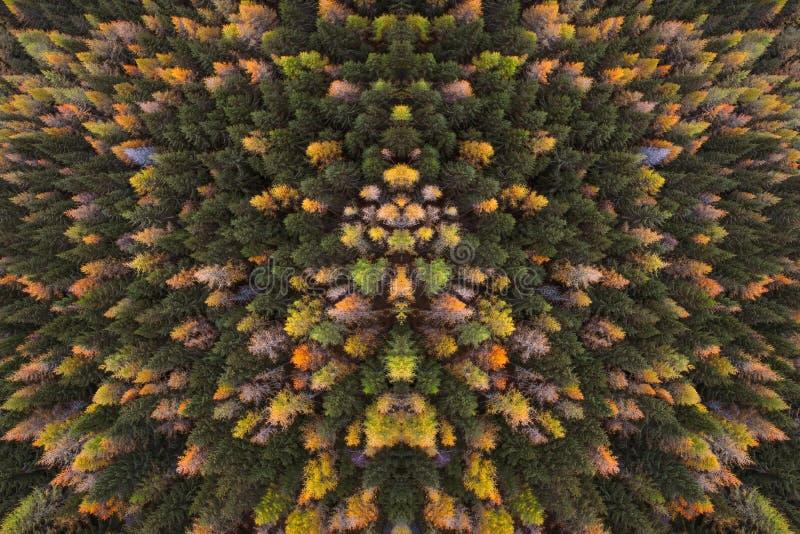 Uma vista de cima à perspectiva do pássaro da floresta A nas cores do outono das árvores nas madeiras imagem de stock
