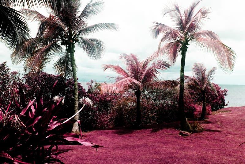 Uma vista de um jardim bonito e de palmeiras em Vieques, Porto Rico no infravermelho da cor fotografia de stock royalty free