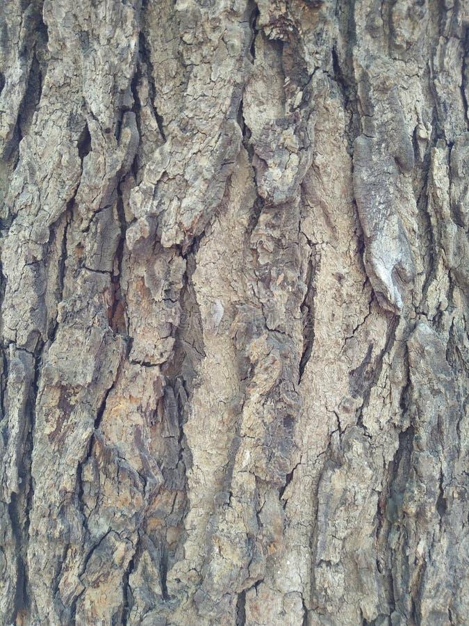 Uma vista detalhada do tronco de árvore para o fundo foto de stock royalty free