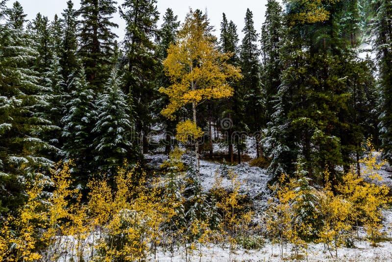 Uma vista do lado da via pública larga e urbanizada do vale da curva, Banff P nacional fotografia de stock royalty free
