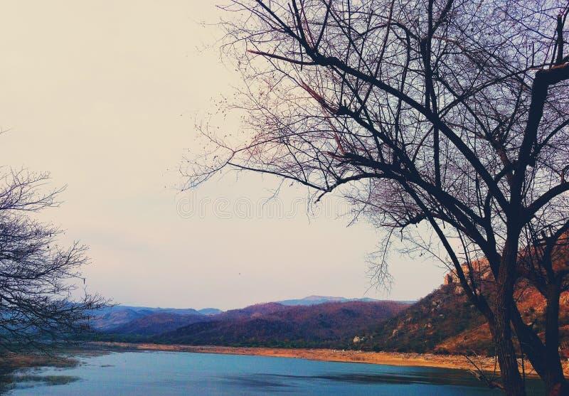 Uma vista do lago cercada por montes e pela árvore leafless ao lado dela imagem de stock