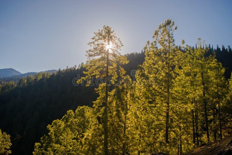 Uma vista do sol através das árvores fotos de stock