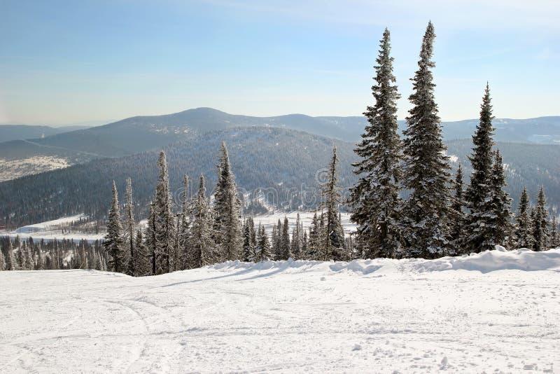 Uma vista na floresta do inverno e o esqui seguem próximo às montanhas fotografia de stock