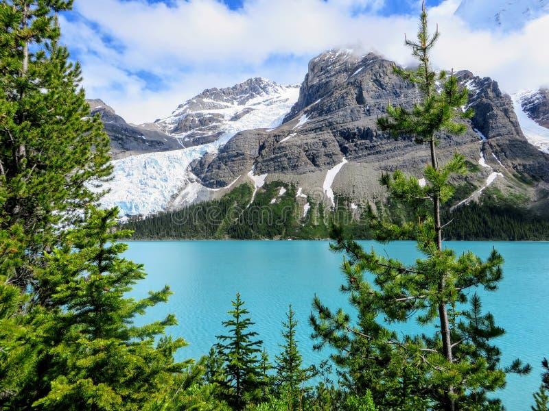 Uma vista próxima da geleira de Robson da montagem diretamente transversalmente do lago berg, ao caminhar a fuga do lago berg no  imagens de stock