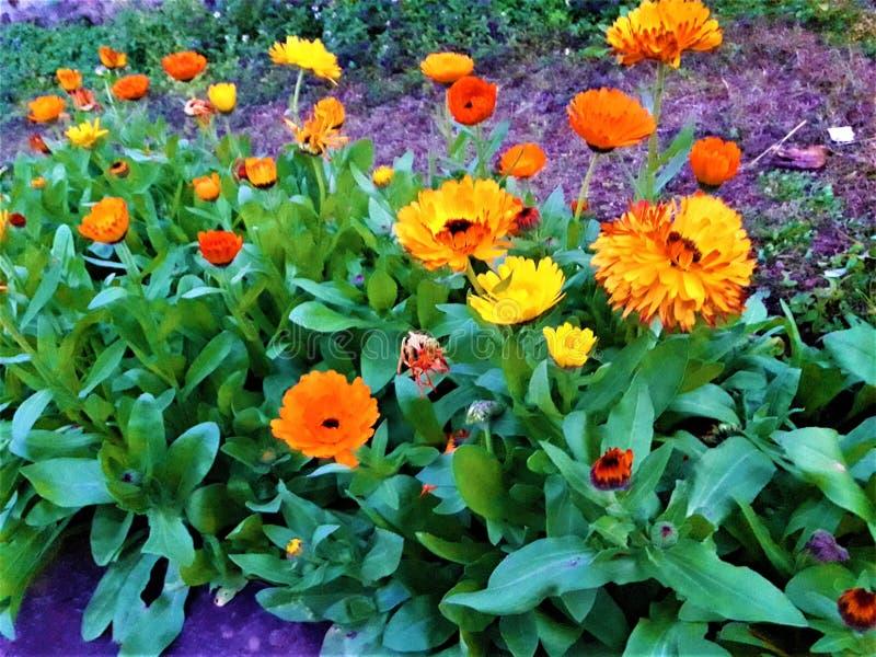Uma vista próxima de flores bonitas & das folhas verdes fotos de stock royalty free