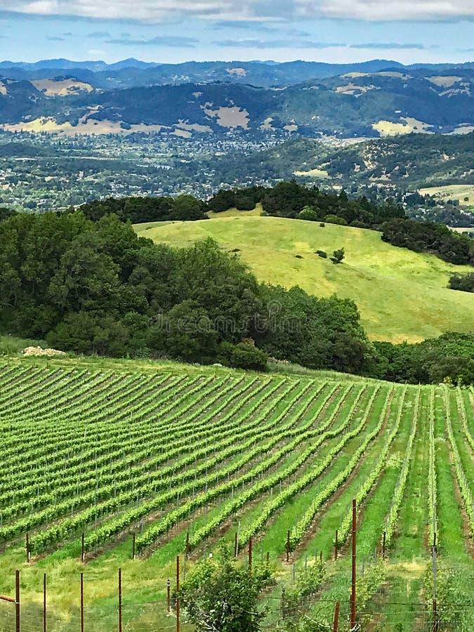 Uma vista sobre os montes e os vinhedos de Sonoma County, Califórnia fotografia de stock royalty free
