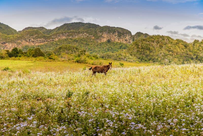 Uma vista típica no vale de Vinales em Cuba fotos de stock