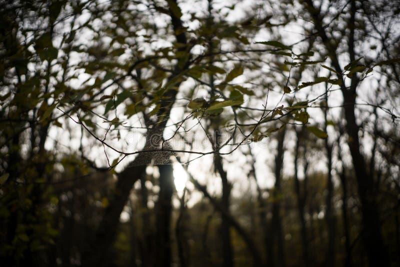 Uma Web de aranha é suspendida entre duas árvores em Jester Park, Iowa imagens de stock royalty free