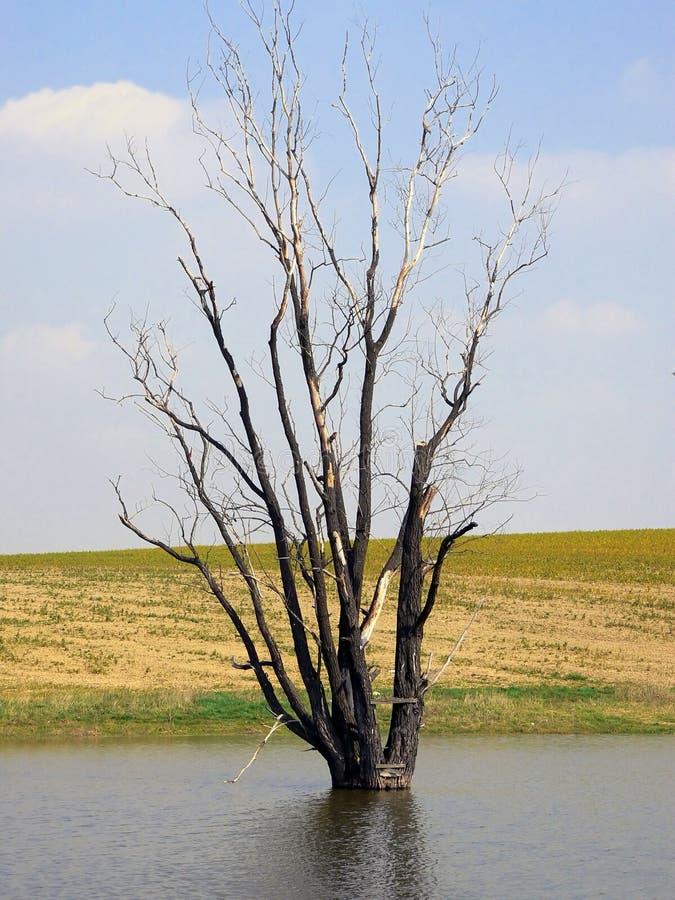 umarłe drzewo fotografia stock