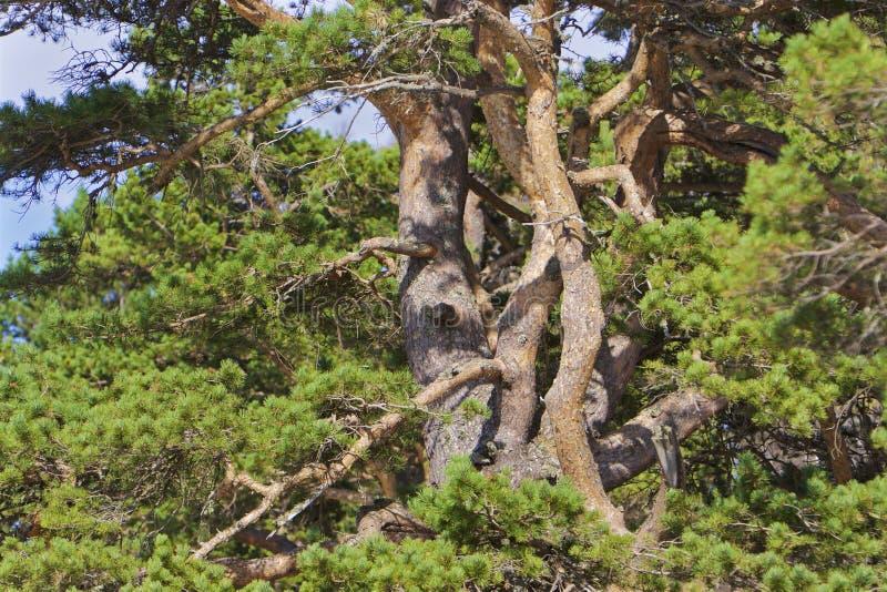 Umarmen der Bäume stockbilder