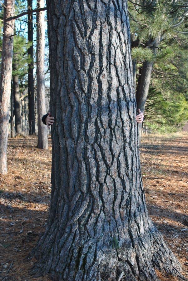 Umarmen Sie einen Baum lizenzfreie stockbilder