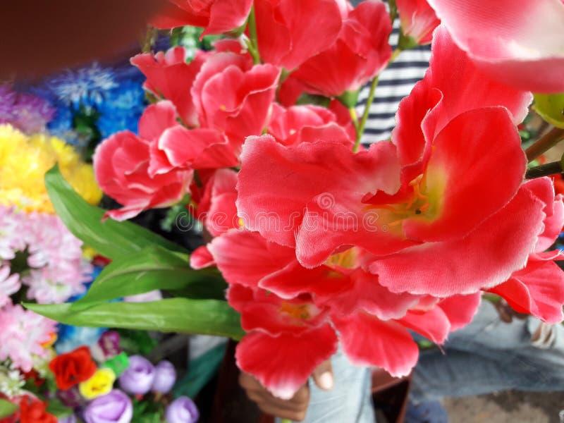 Umas flores vermelhas ou azuis bonitas no jardim a Bengal ocidental imagem de stock royalty free