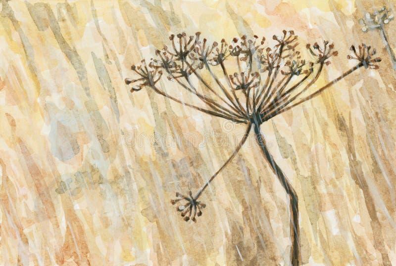 Umbel av en ospecificerad växt från ApiaceaeUmbelliferaefamiljen i ett regnigt väder vektor illustrationer
