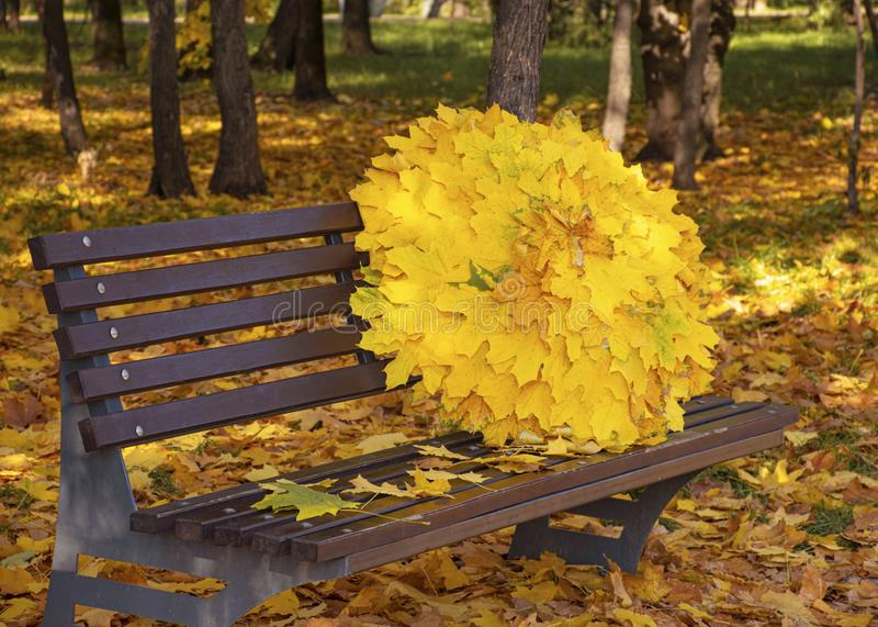 An umbrella of autumn maple yellow leaves lies on a brown wooden park bench. Autumn foliage in the city. October November. An umbrella of autumn maple yellow royalty free stock image