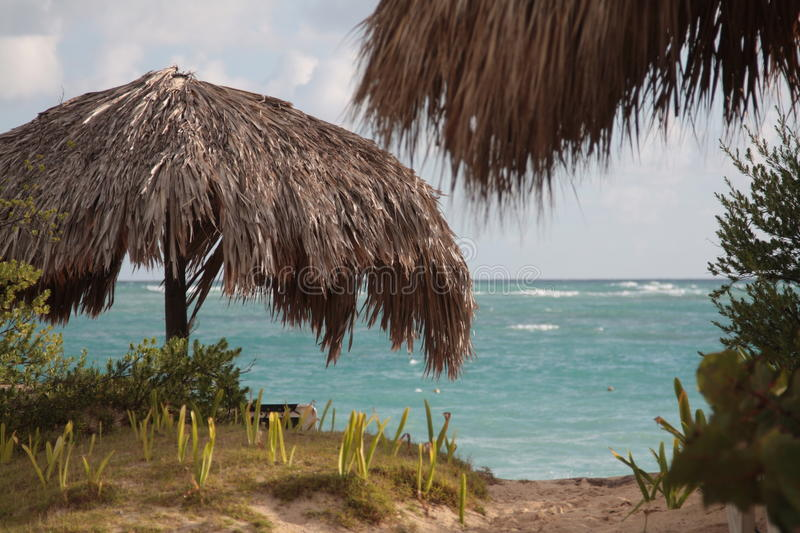 Download Umbrella on the beach stock image. Image of nature, tree - 11641785