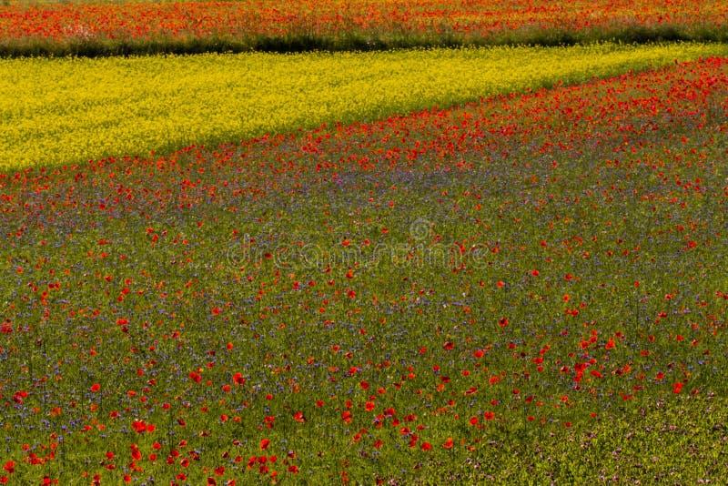 Umbria Italy blom- skönhet royaltyfria bilder