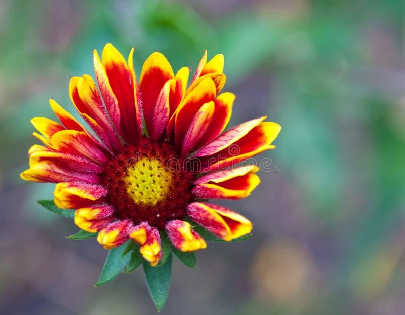 Umfassende Blume stockbilder