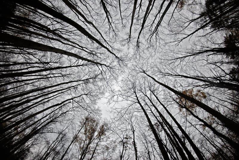 Umgebende Herbstbäume lizenzfreies stockfoto