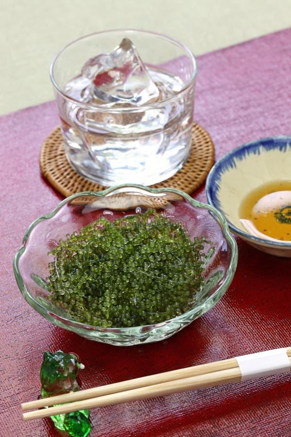 Umi budo, green caviar, sea grapes, seaweed. Edible algae royalty free stock image