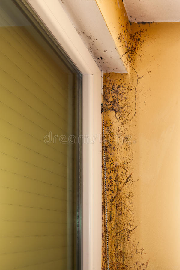 Umidade e molde - problemas em uma casa imagens de stock