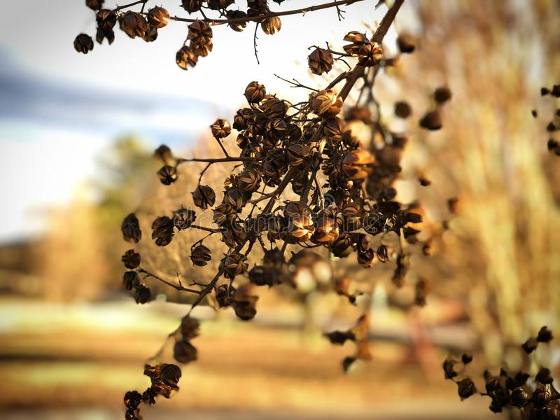 Umierać Pączkuje na drzewie w zimie fotografia stock