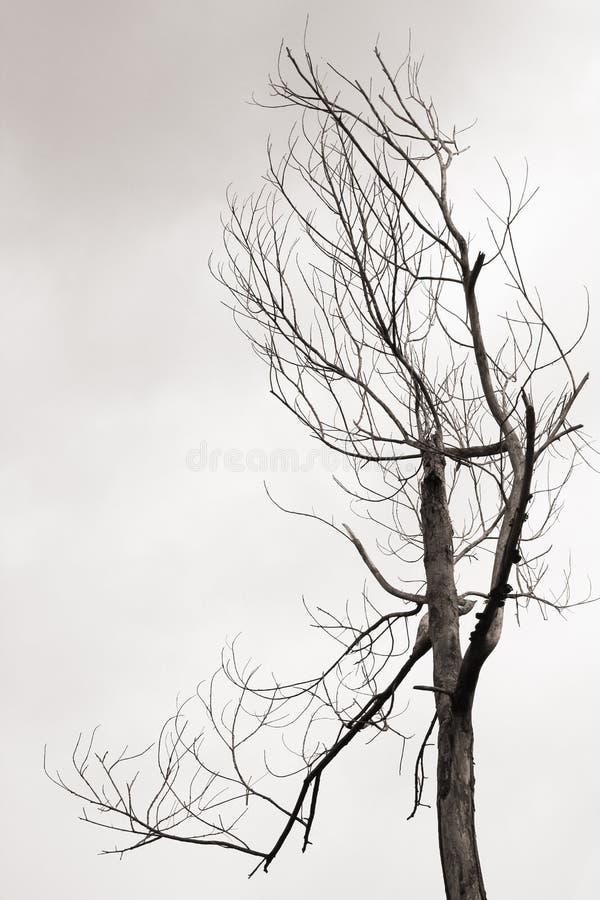 Umierał drzewa obraz stock