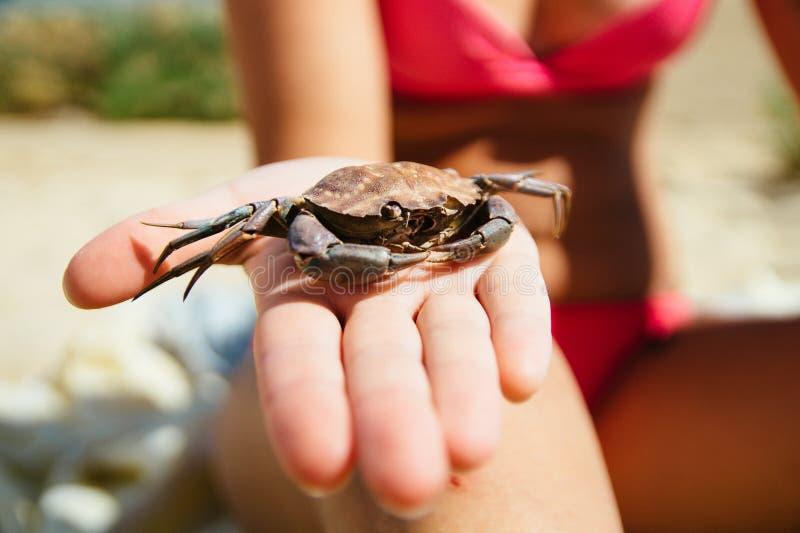 Umierał krab skorupę znajdującą na plaży i trzymającą w ręce, kobietą jest ubranym bikini na plaży Fuseta, Portugalia zdjęcie royalty free