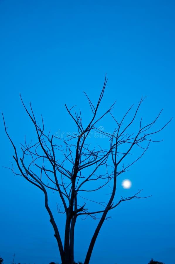 Umierający drzewo obrazy royalty free