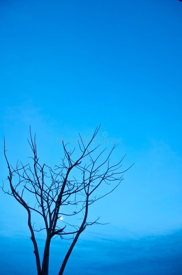Umierający drzewo obraz royalty free
